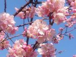 ブログ:春よ早くこい
